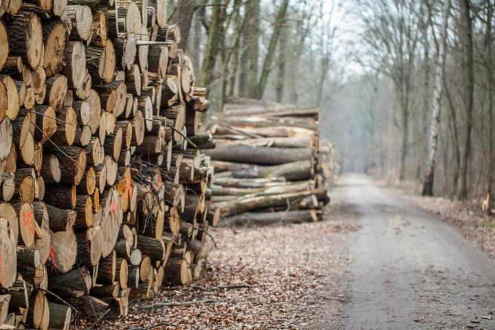 Im Zeichen der Umwelt | Wissenschaftsladen Bonn